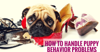How To Handle Puppy Behavior Problems