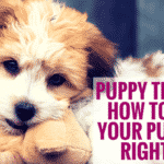 Puppy Training: How To Train Your Puppy The Right Way