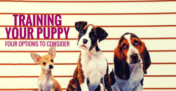 Training Your Puppy: Four Options To Consider