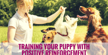Training Your Puppy With Positive Reinforcement
