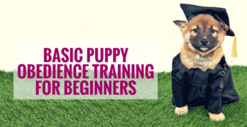 Basic Puppy Obedience Training For Beginners