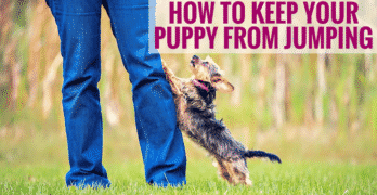 How To Keep Your Puppy From Jumping