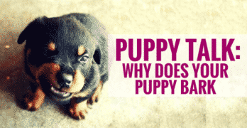 Puppy Talk: Why Does Your Puppy Bark