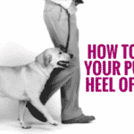 How To Teach Your Puppy To Heel Off The Leash