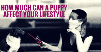 How Much Can A Puppy Affect Your Lifestyle