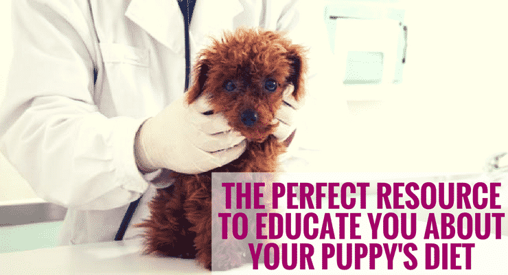 The Perfect Resource to Educate You About Your Puppy's Diet