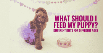 What should I feed my puppy? Different diets for different ages