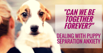 """Can We Be Together Forever?"" – Dealing With Puppy Separation Anxiety"
