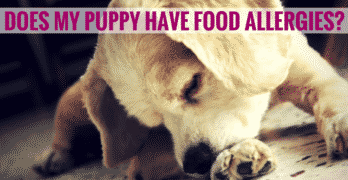 How To Determine If My Puppy Has Food Allergies