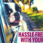 Hassle-Free Travel With Your Puppy