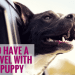 How To Have A Fun Travel With Your Puppy