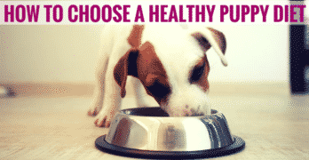 How To Choose a Healthy Puppy Diet