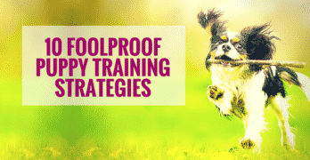 10 Foolproof Puppy Training Strategies