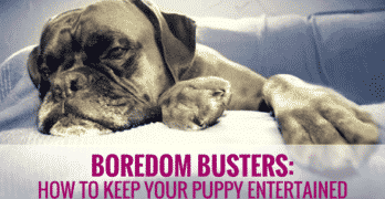 Boredom Busters – How to Keep Your Puppy Entertained