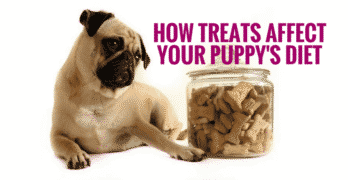 How Treats Affect Your Puppy's Diet