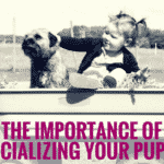 The Importance of Socializing Your Puppy