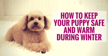 How To Keep Your Puppy Safe and Warm During Winter