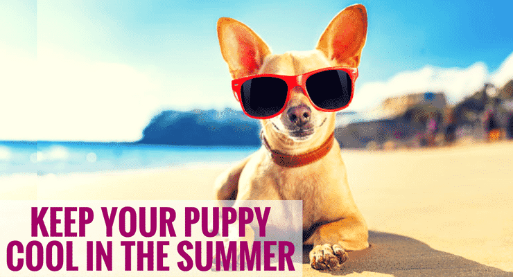 Keep Your Puppy Cool in the Summer