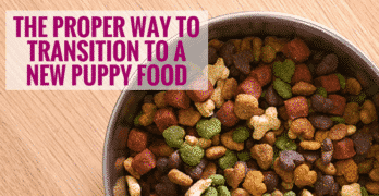 The Proper Way To Transition To A New Puppy Food