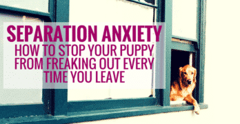 Separation Anxiety – Why It Happens and How to Help Your Dog