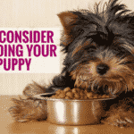 What To Consider When Feeding Your New Puppy