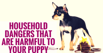 Household Dangers That Are Harmful to Your Puppy