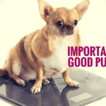 Learn The Importance of a Good Puppy Diet