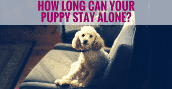 How Long Can Your Puppy Stay Alone?