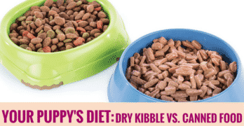 Your Puppy's Diet: Dry Kibble vs. Canned Food