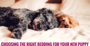 Choosing The Right Bedding For Your New Puppy