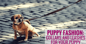 Puppy Fashion: Collars and Leashes for your Puppy