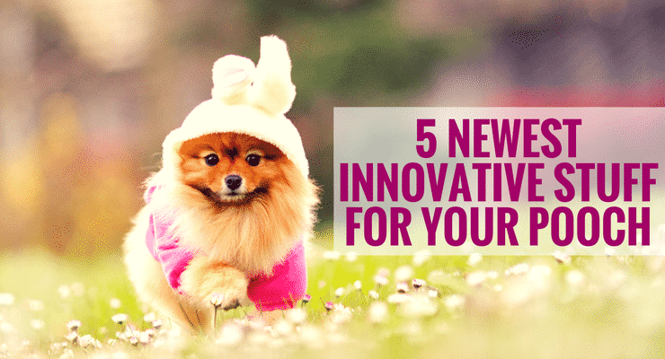 5 Newest Innovative Stuff For Your Pooch