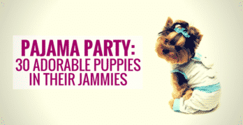 Pajama Party: 30 Adorable Puppies In Their Jammies