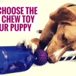 How To Choose The Perfect Chew Toy For Your Puppy