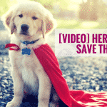 [VIDEO] Hero Puppies Save The Day