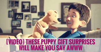 [VIDEO] These Puppy Gift Surprises Will Make You Say Awww