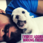 [VIDEO] Adorable Puppies Waking Their Humans Up