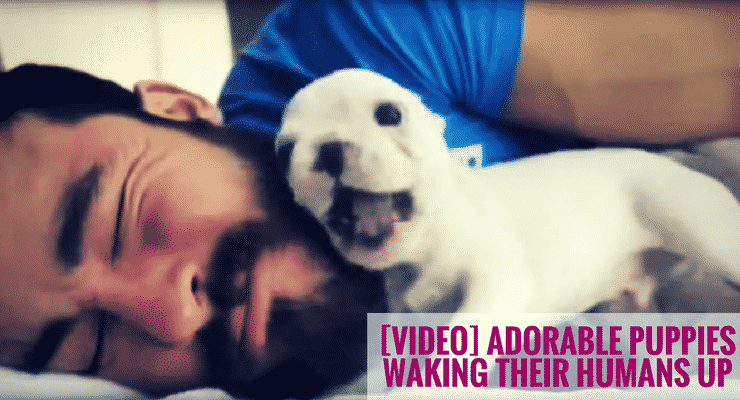 Adorable Puppies Waking their Humans