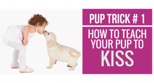 How to teach your pup to Kiss