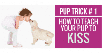 [Video] Pup Trick #1 – How to teach your pup to Kiss