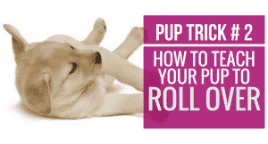 How to teach your pup to Roll Over
