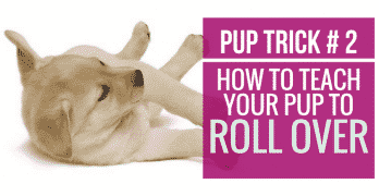 [Video] Pup Trick #2 – How to teach your pup to Roll Over