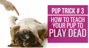 How to teach your pup to Play Dead