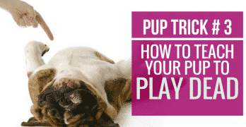 [Video] Pup Trick #3 – How to teach your pup to Play Dead