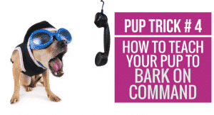 How to teach your pup to Bark on Command