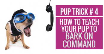 [Video] Pup Trick #4 – How to teach your pup to Bark on Command