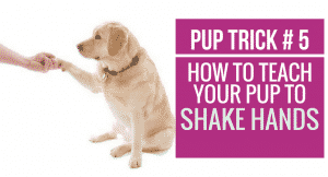 How to teach your pup to Shake Hands