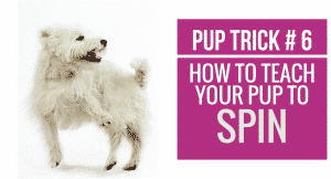 How to teach your pup to Spin