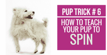 [Video] Pup Trick #6 – How to teach your pup to Spin