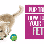 [Video] Pup Trick #7 – How to teach your pup to Fetch